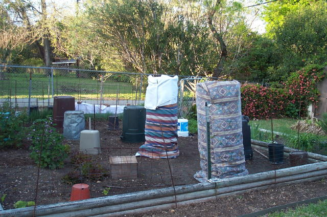 2006 Garden Chronicles – Cover your tomatoes