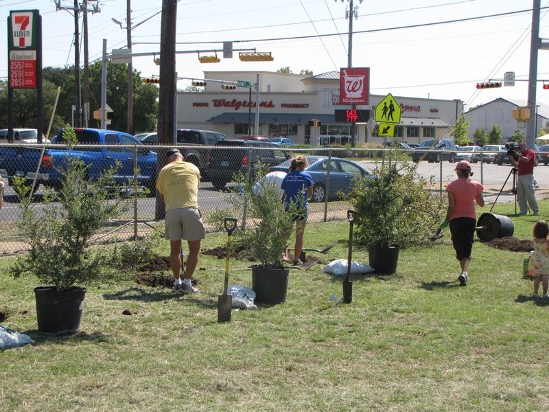 Beautifying the area a few trees at a time