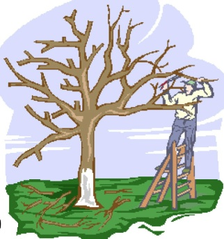 Tree Pruning Workshop This Saturday, January 19