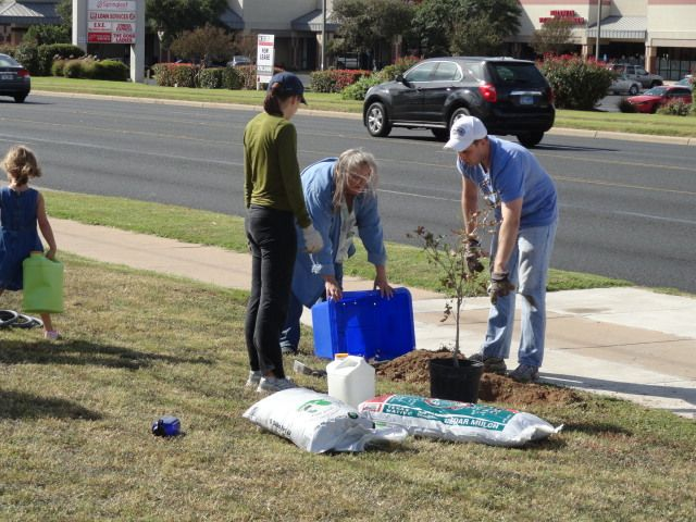 Tree Planting on Burnet Rd Saturday 3/9 9 AM to Noon